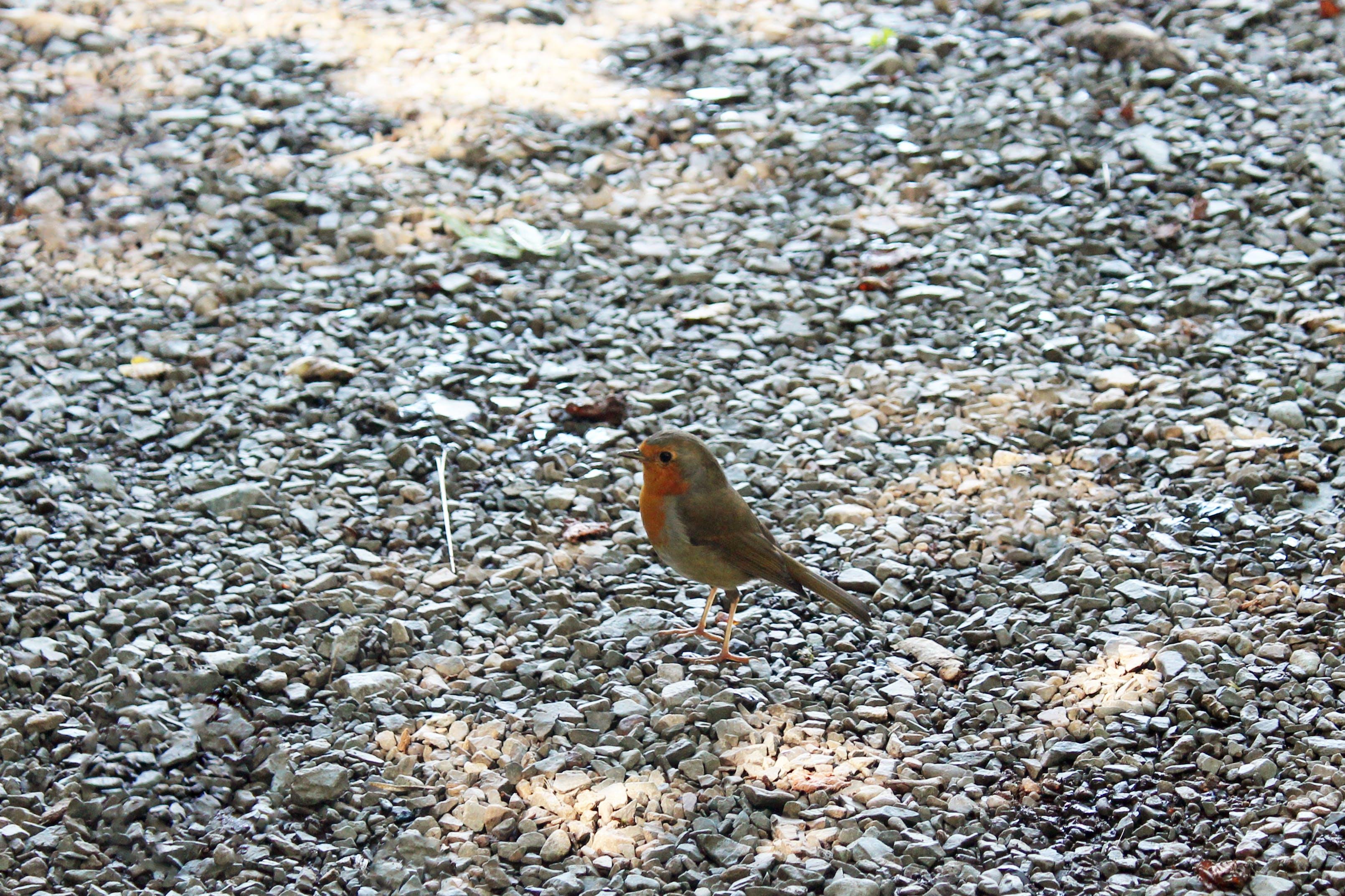 Free stock photo of animal, animal photography, avian, bird