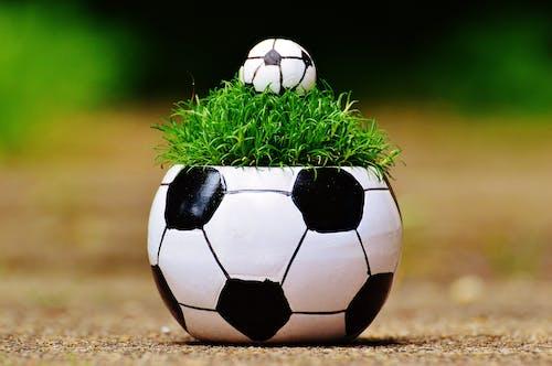 Photos gratuites de 2016, balle, ballon de foot, clairière