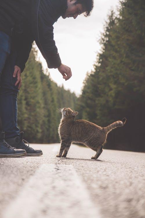 henkilö, ihminen, kissa