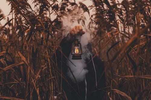 Základová fotografie zdarma na téma barvy, krajina, lampa, osoba