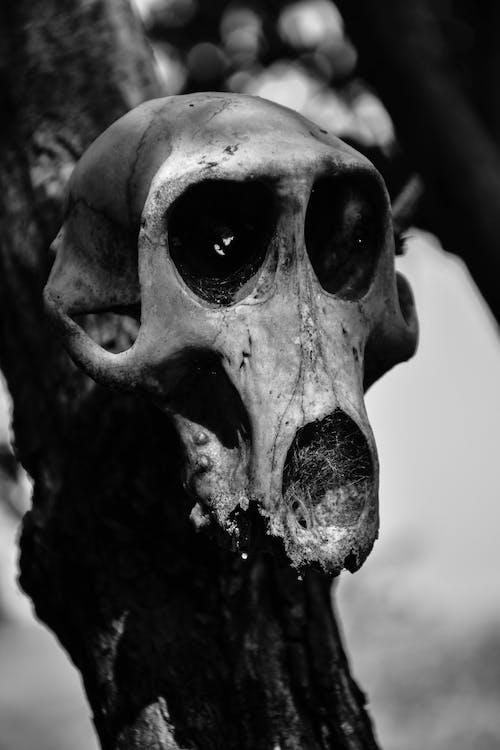 アフリカ, タンザニア, 動物, 死の無料の写真素材