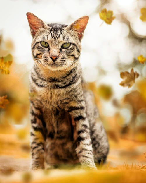 Selective Focus Photography Of Tabby Cat