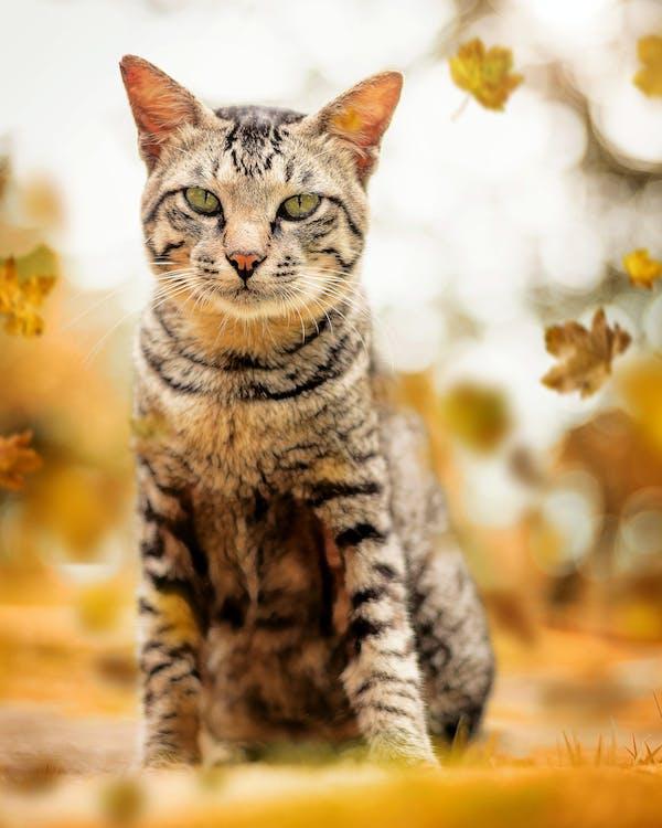 con mèo, con vật, đáng yêu