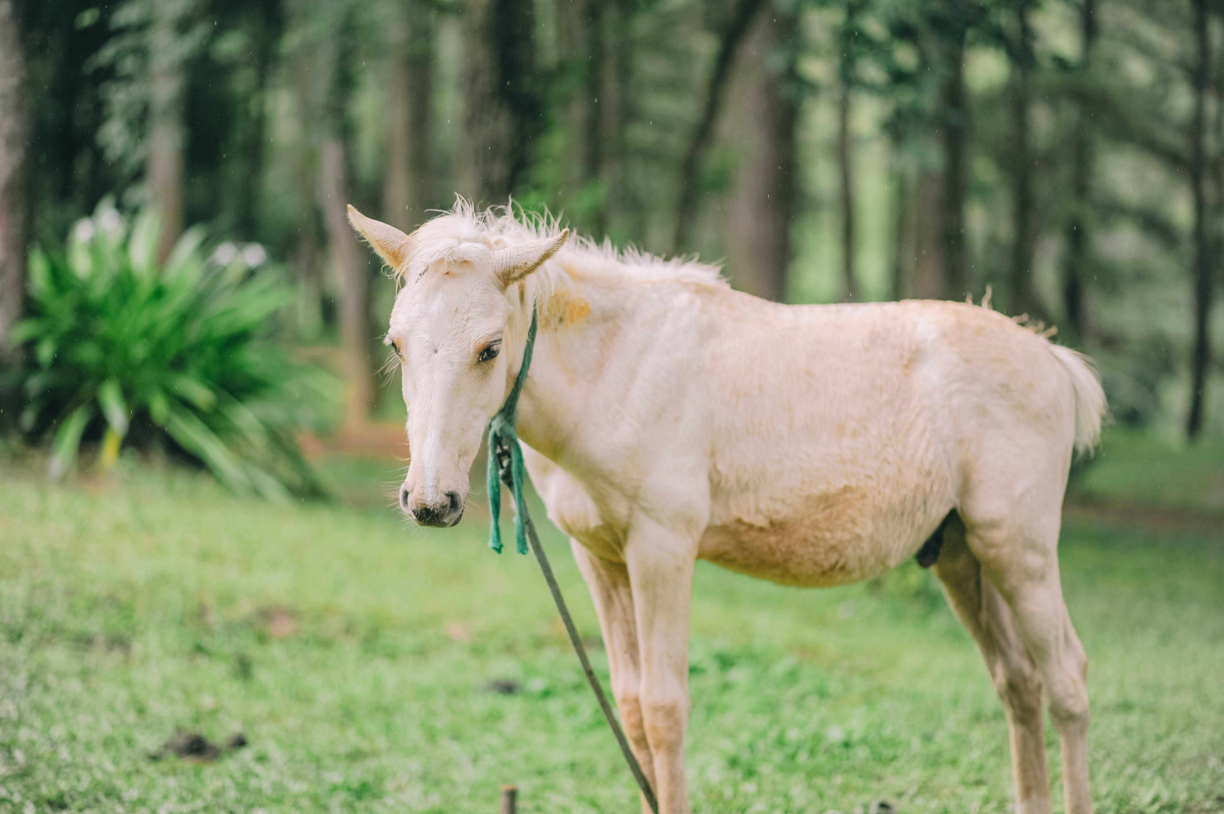 Foto profissional grátis de animais selvagens, animal, área, campina