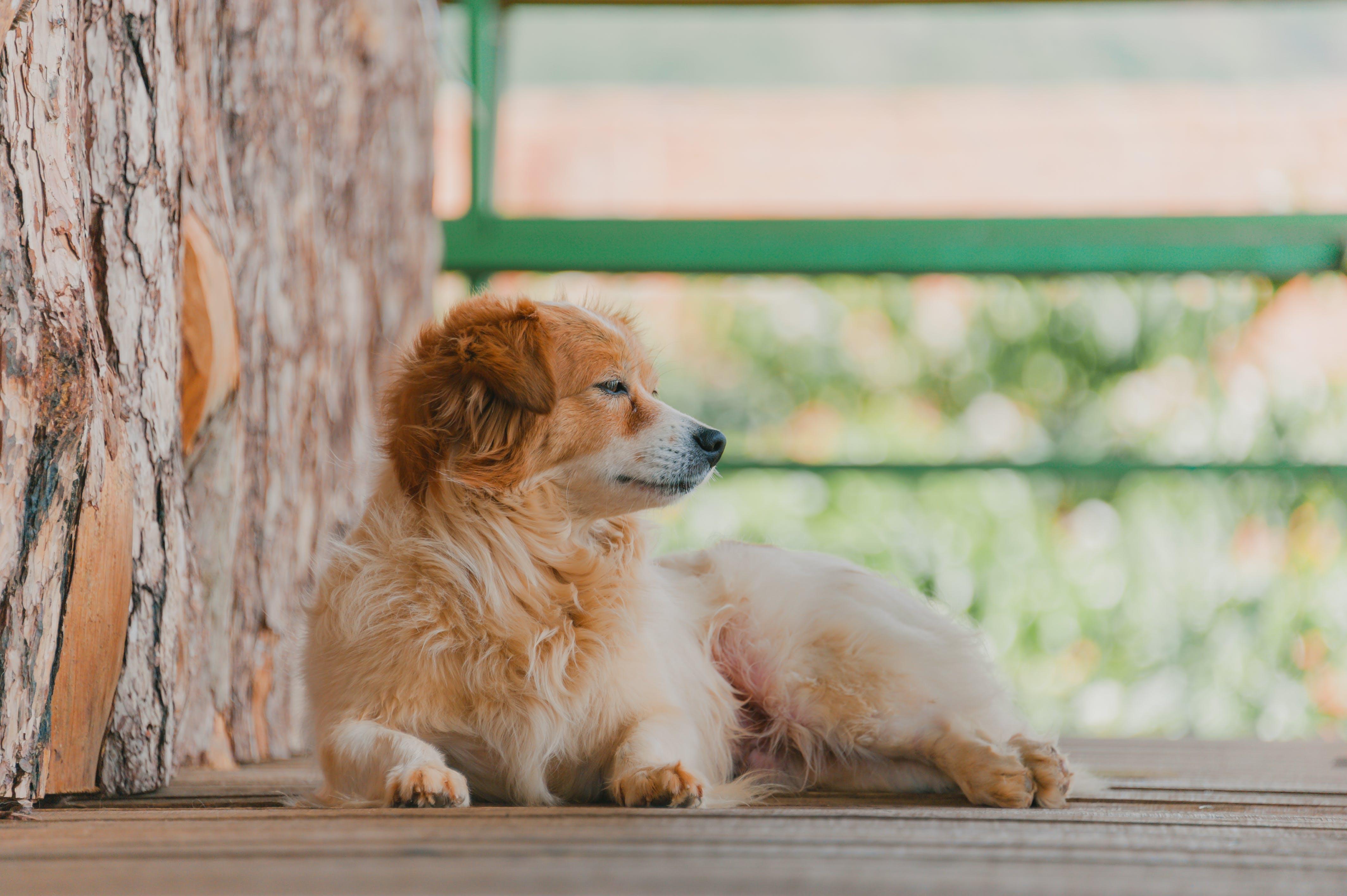 Puppy On Brown Wood Deck