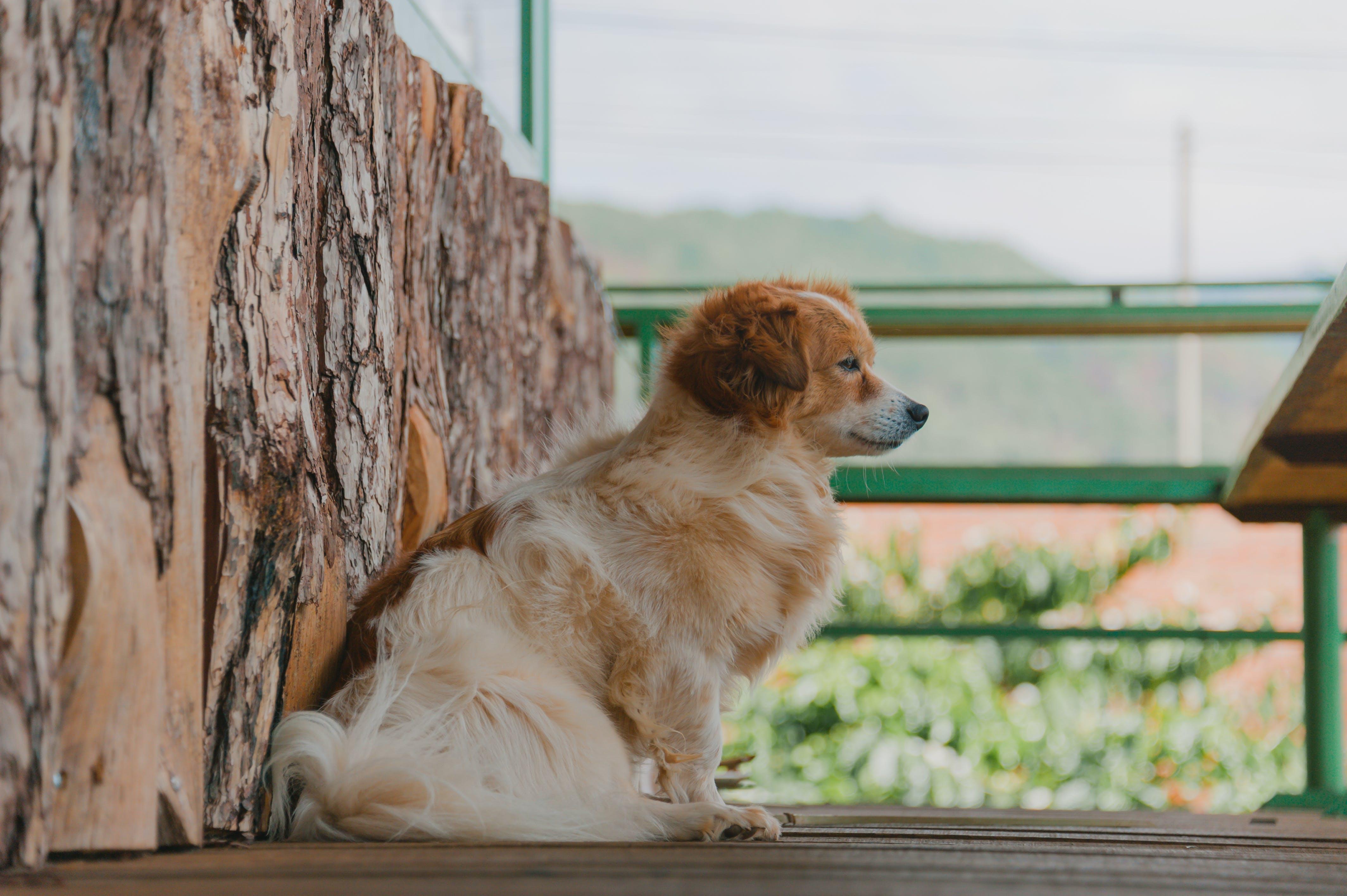 Fotobanka sbezplatnými fotkami na tému cicavec, domáce zviera, pes, psovitá šelma