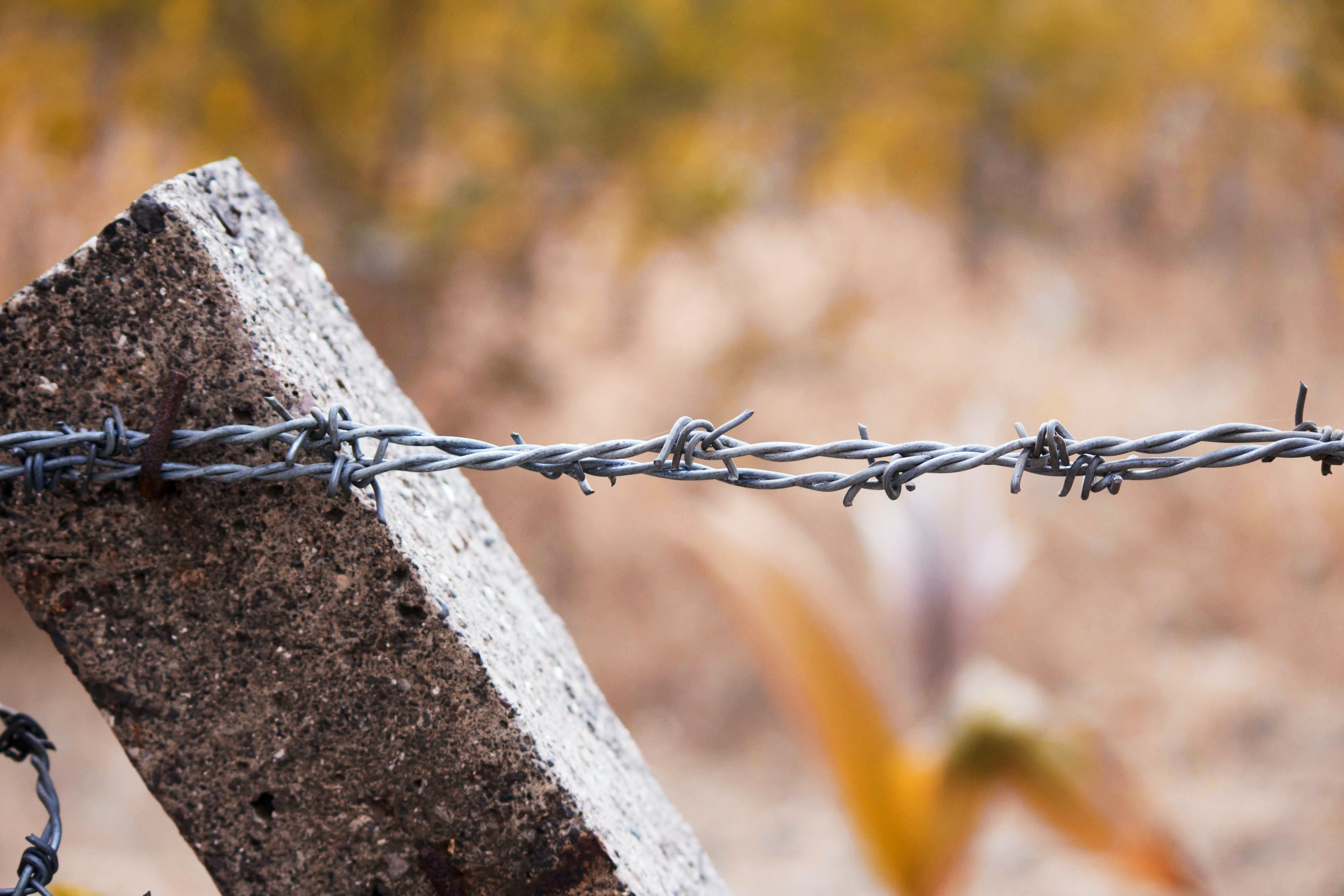 Free stock photo of barb wires, barbed wire, fences