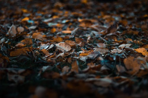 Close-Up Photo of Fallen Leaves