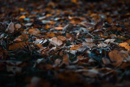 Kostnadsfri bild av 4k tapeter, fallna löv, fokus, HD tapeter