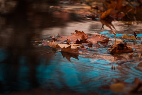 Dried Leaves on Body of Water