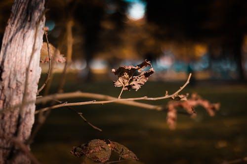 Foto profissional grátis de filial, folha seca, fotografia de pequenos seres, galho