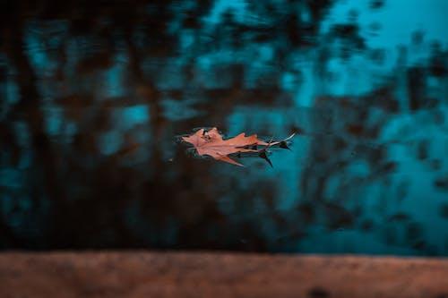 反射, 楓葉, 水, 池塘 的 免費圖庫相片
