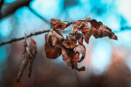 ぼかし, フォーカス, 乾いた葉, 乾燥した葉の無料の写真素材