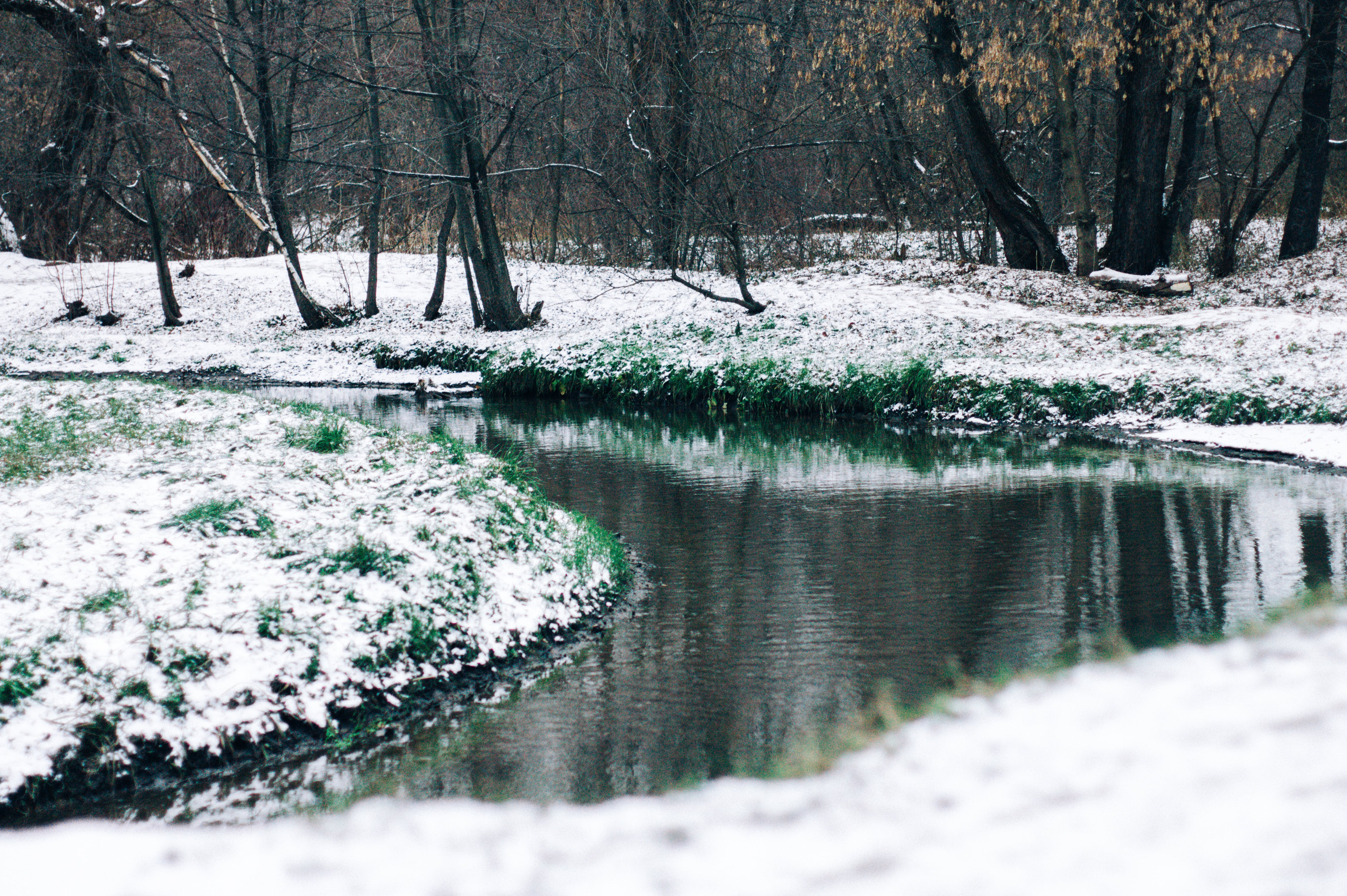 Free stock photo of forest, grass, river, snow