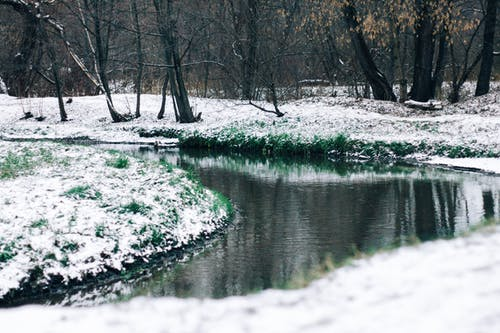 woter, 冬季, 森林, 草 的 免費圖庫相片