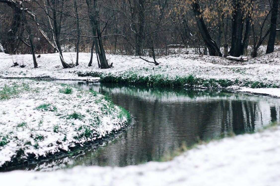 çim, çimen, kar