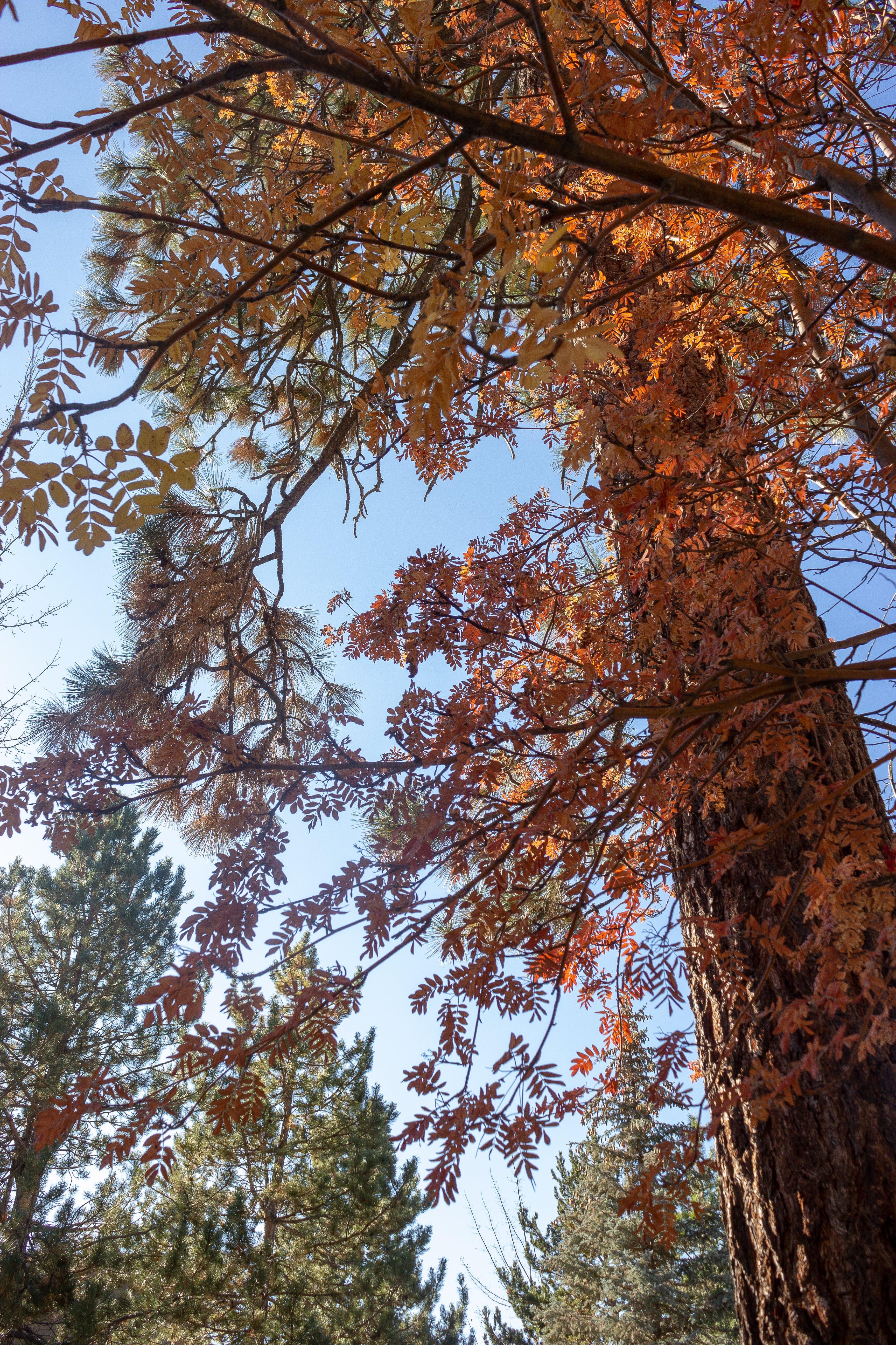 Free stock photo of autumn, colors, fall, Lake Tahoe