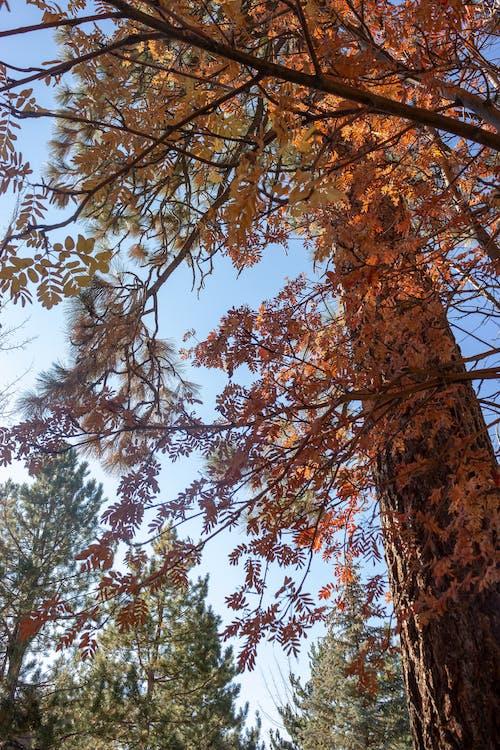 Photos gratuites de arbres, ciel, couleurs, lac tahoe