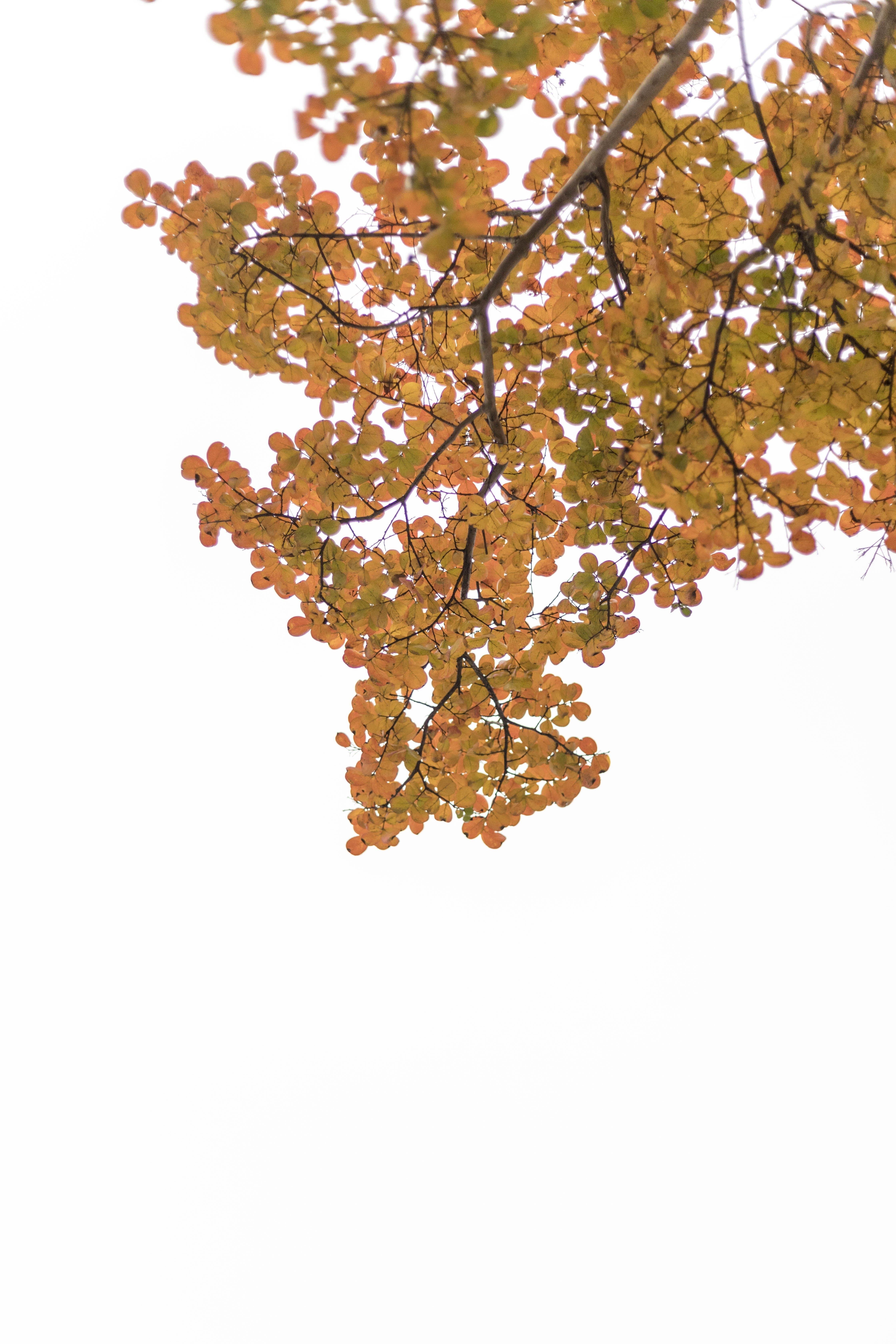 Free stock photo of autumn, autumn colors, autumn leaf, 秋