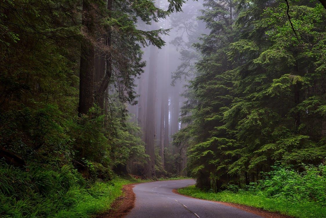 森林, 樹木, 樹林