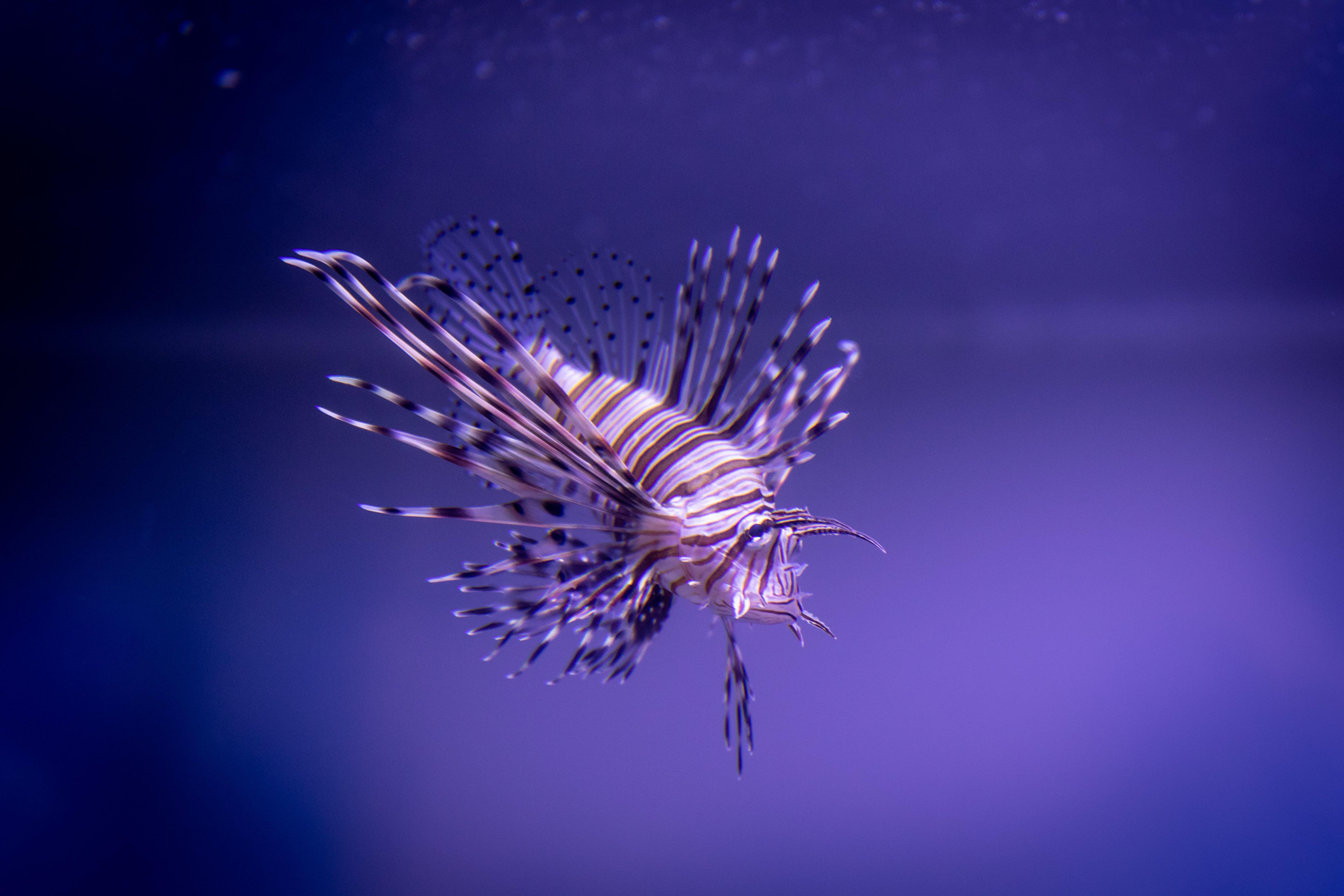 Free stock photo of animal, aquatic animal, biology, blue