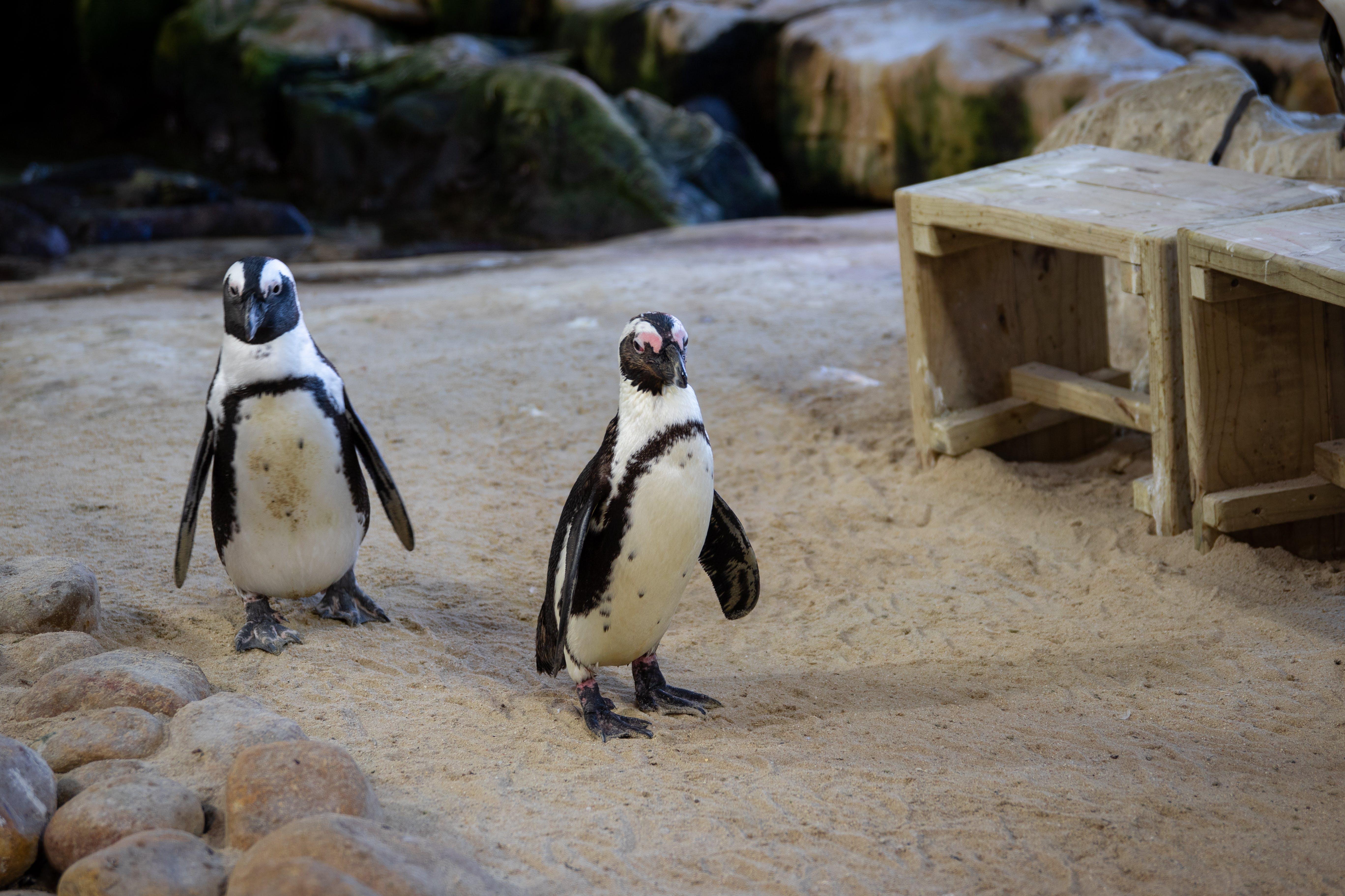 Free stock photo of animal, aquarium, beach, birds