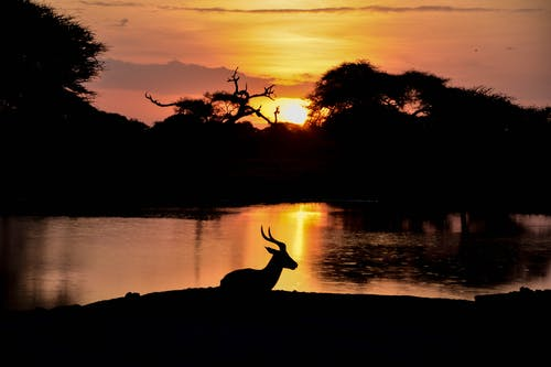 Silhouette View of Animal Beside Lake