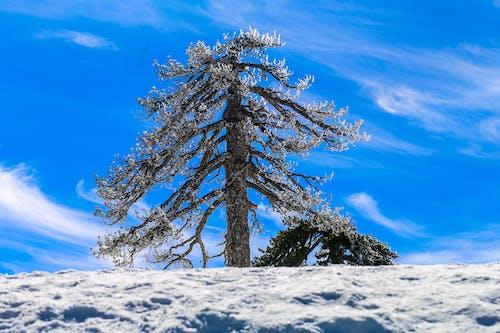 Gratis lagerfoto af bjerge, blå himmel, landskab, natur