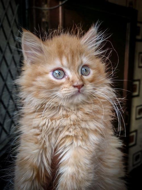 Adobe Photoshop, 動物, 動物愛好者, 動物攝影 的 免費圖庫相片