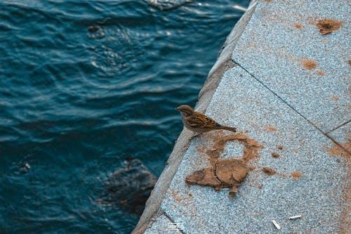 バードウォッチング, 母なる自然, 深海, 自然の無料の写真素材