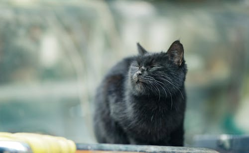 Selective Focus Photo of a Black Cat with its Eyes Closed