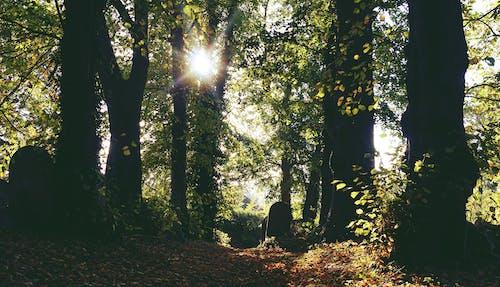 Kostenloses Stock Foto zu bäume, beratung, dämmerung, farbe