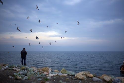 Безкоштовне стокове фото на тему «людина, море, чайки»