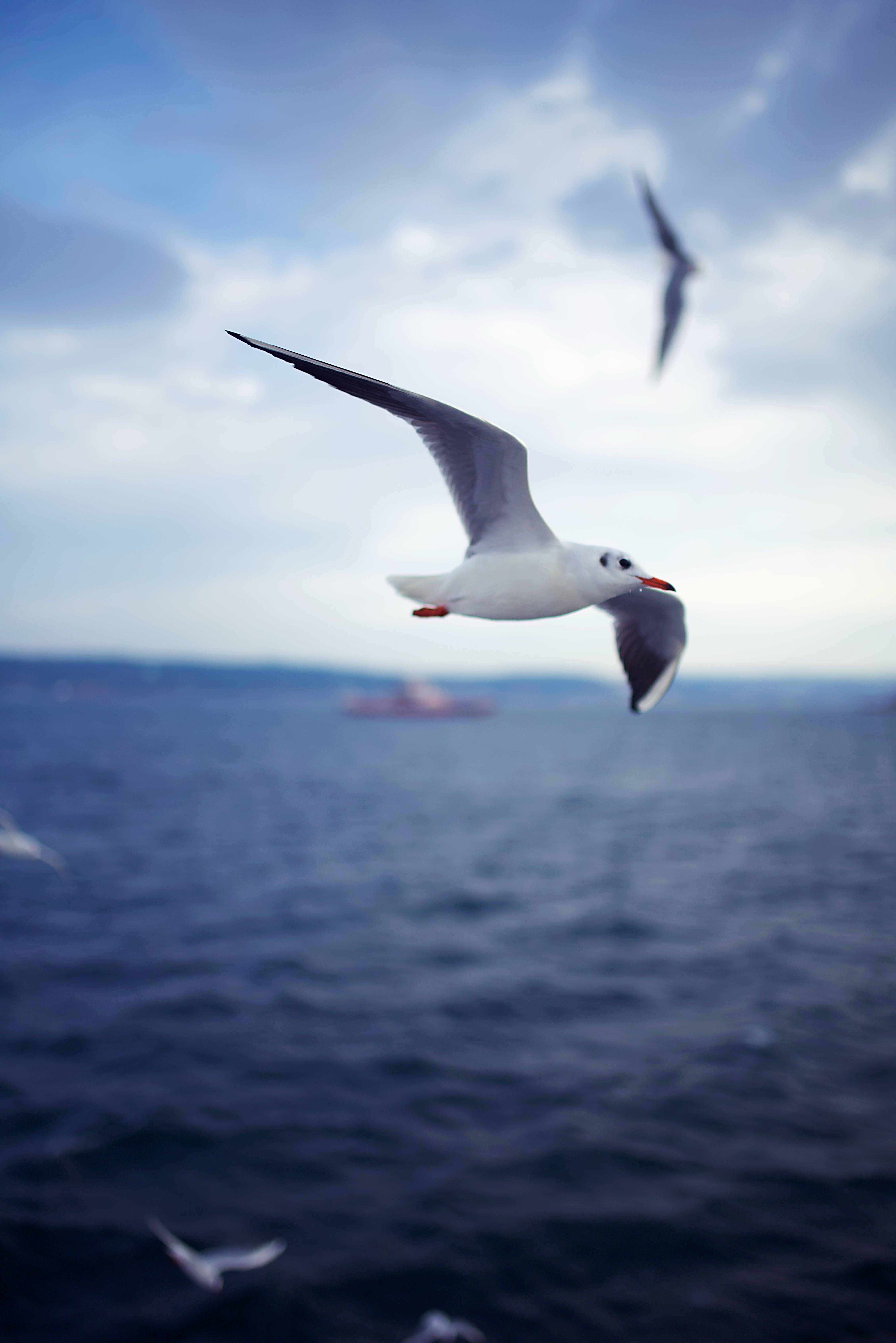 Free stock photo of blue, flying, sea, seagull