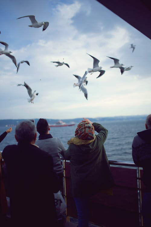 Flying Seagulls over Body of Water