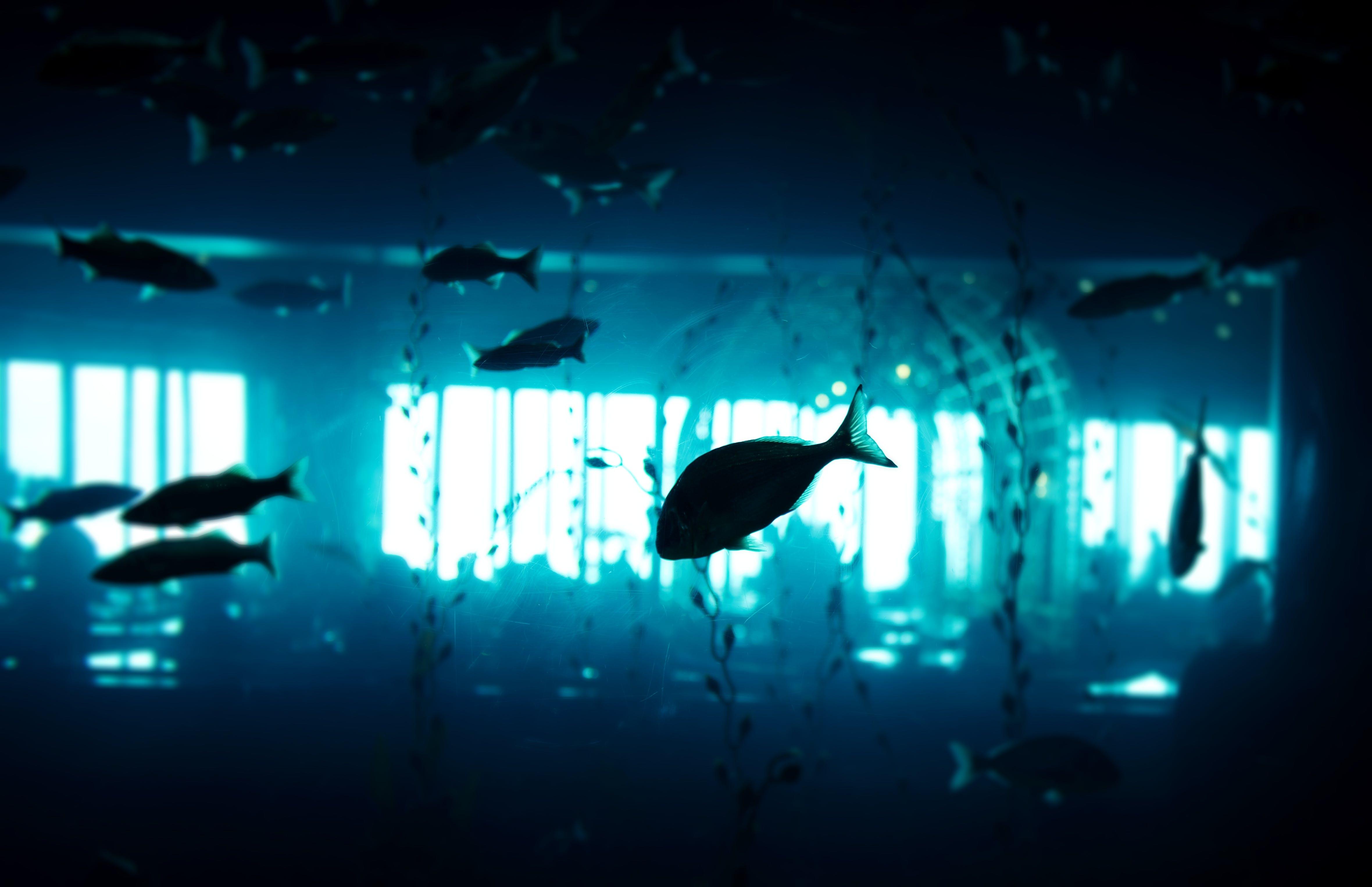 Free stock photo of aquarium, blue, fish, light
