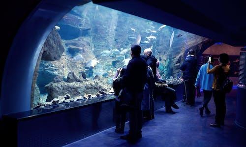 Безкоштовне стокове фото на тему «акваріум, люди»