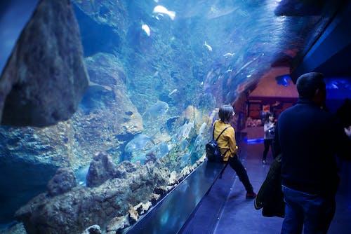 Fotobanka sbezplatnými fotkami na tému akvárium, druhy rýb, hlboký, ľahký