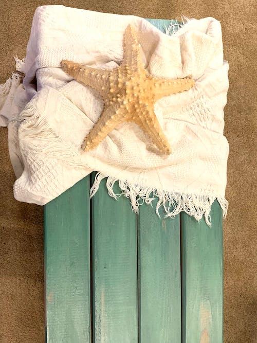 Immagine gratuita di panca sulla spiaggia, spiaggia, stella marina