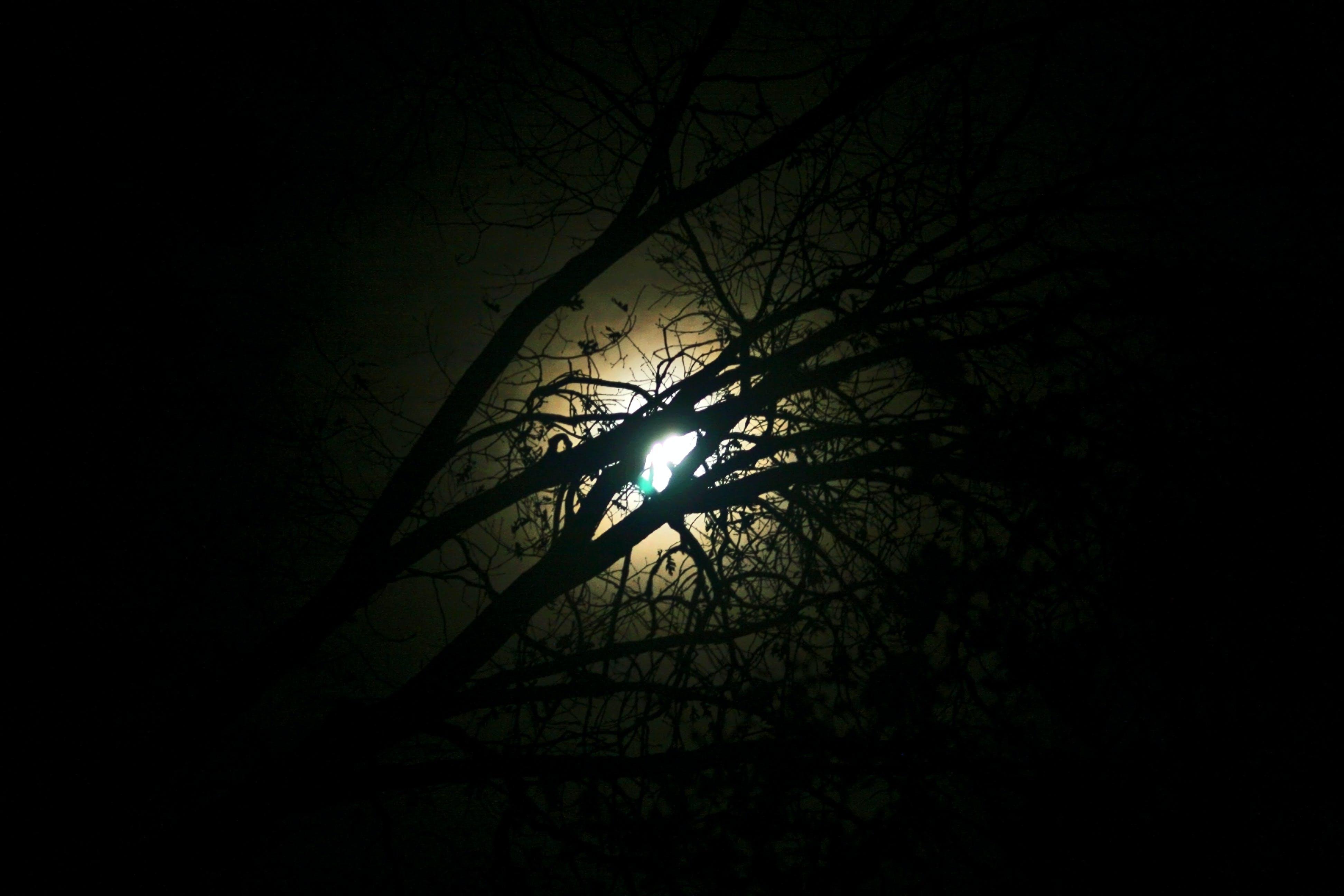 Free stock photo of camping, full moon, moonlight, trees
