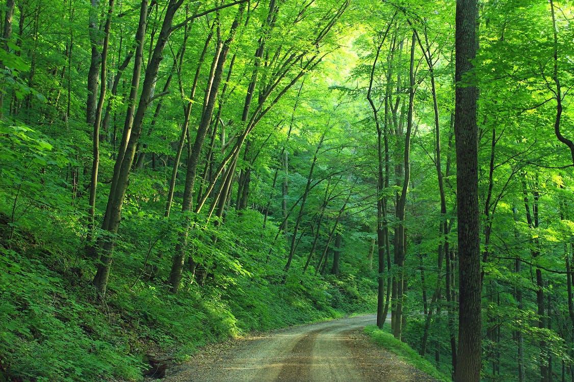 árvores, calçada, caminho