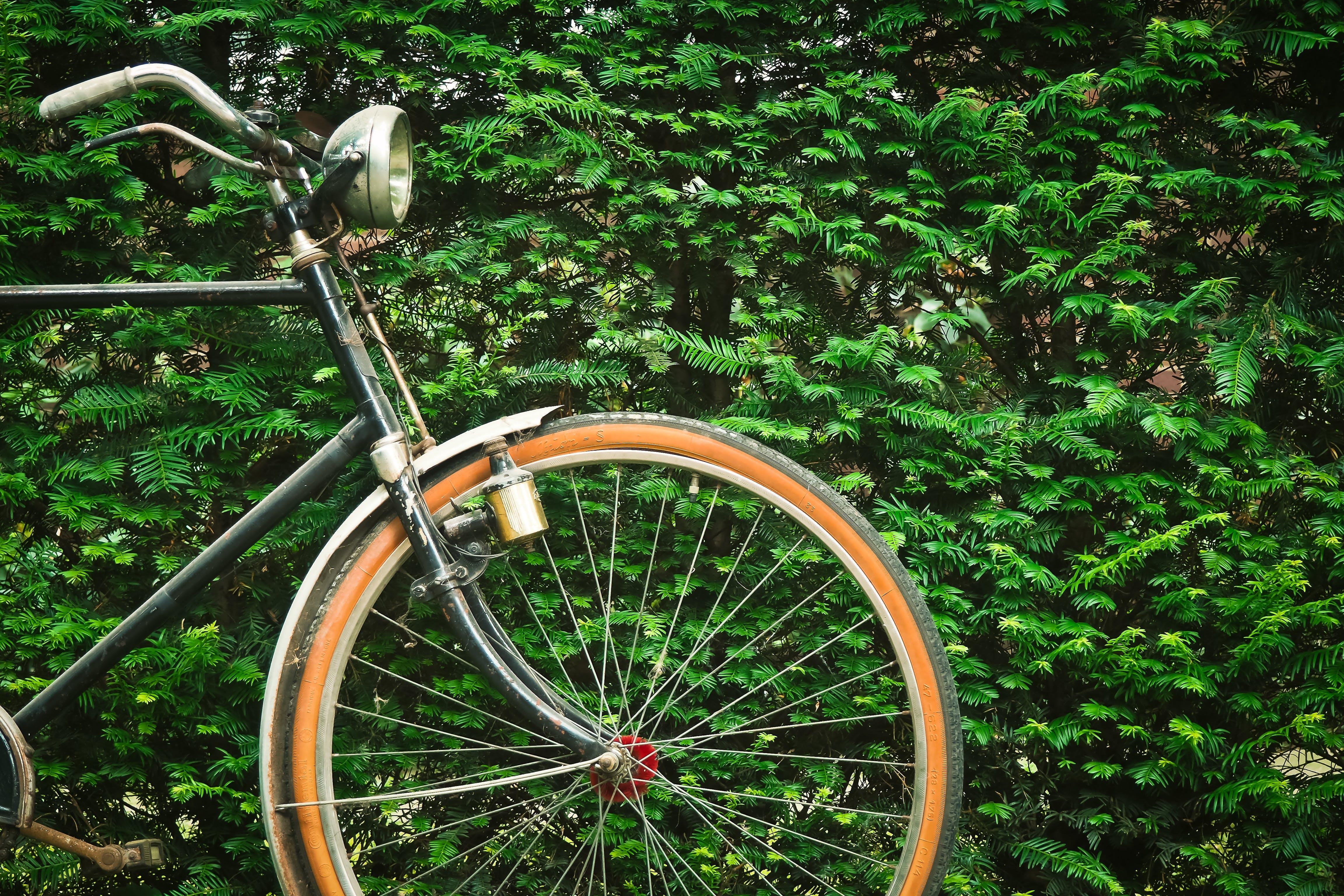 Black Beach Cruiser Bicycle Near Green Hedge during Daytime