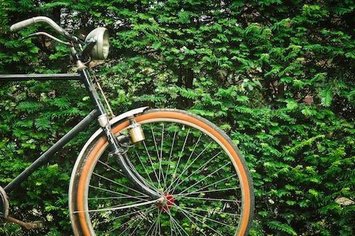 Foto d'estoc gratuïta de bici, planta, ràdios, roda