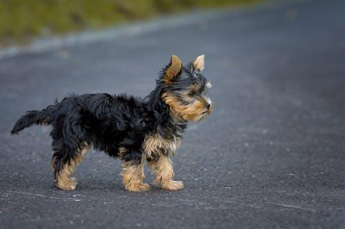 Immagine gratuita di animale, animale domestico, cane, canino