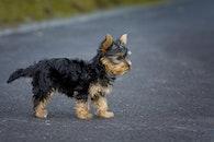 road, animal, dog