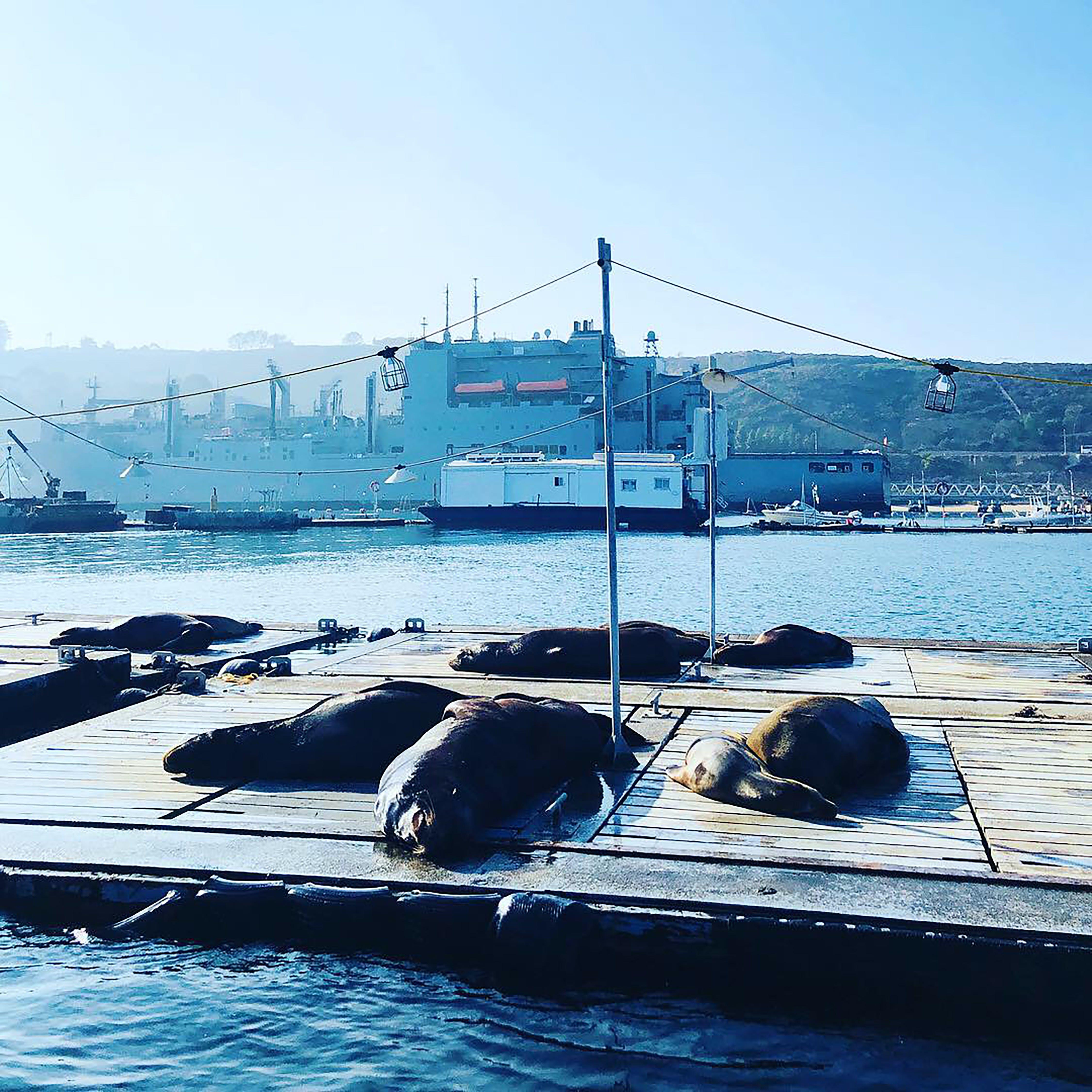 Free stock photo of navy, sea lions