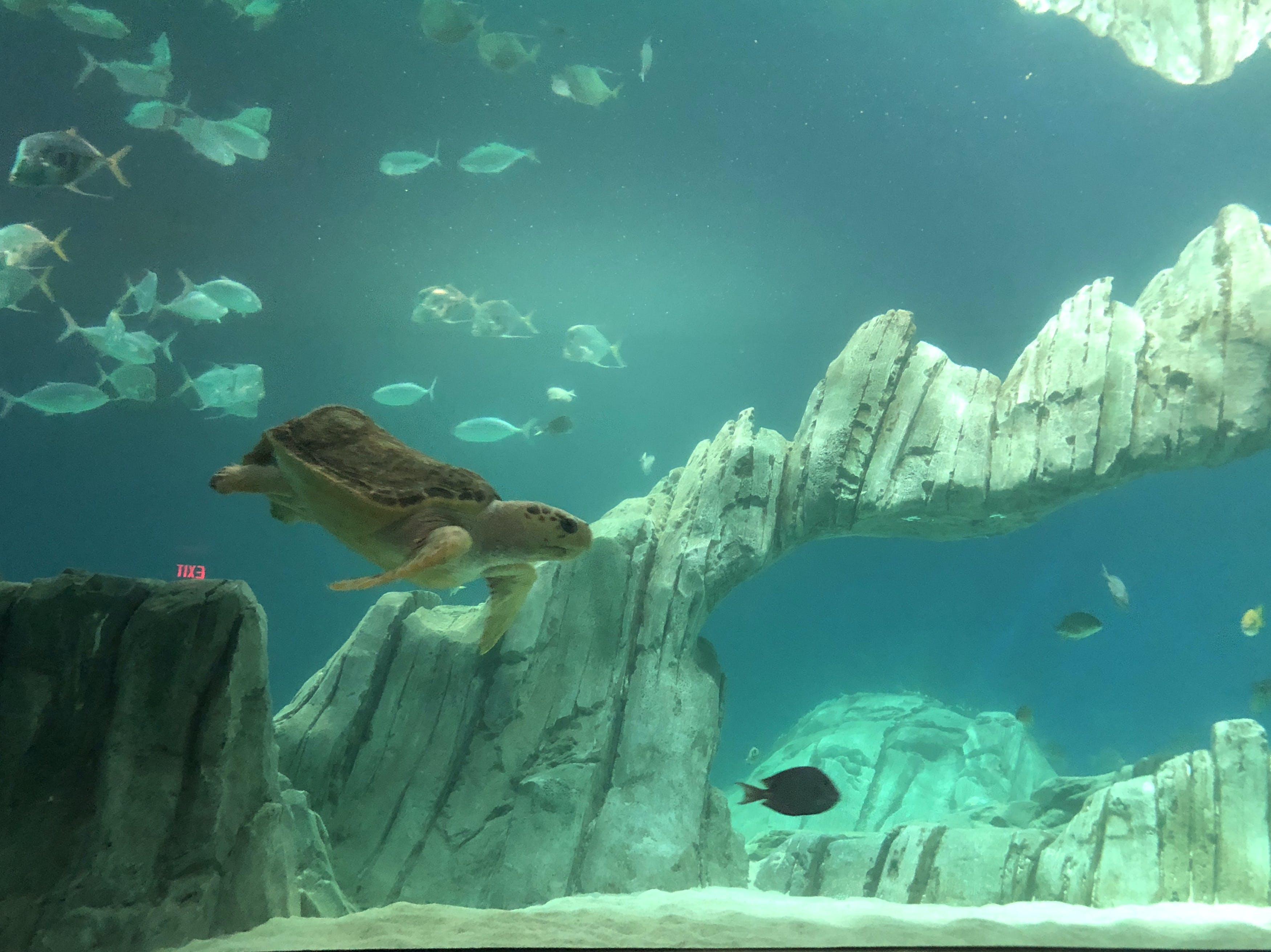 Free stock photo of aquarium, sea turtle