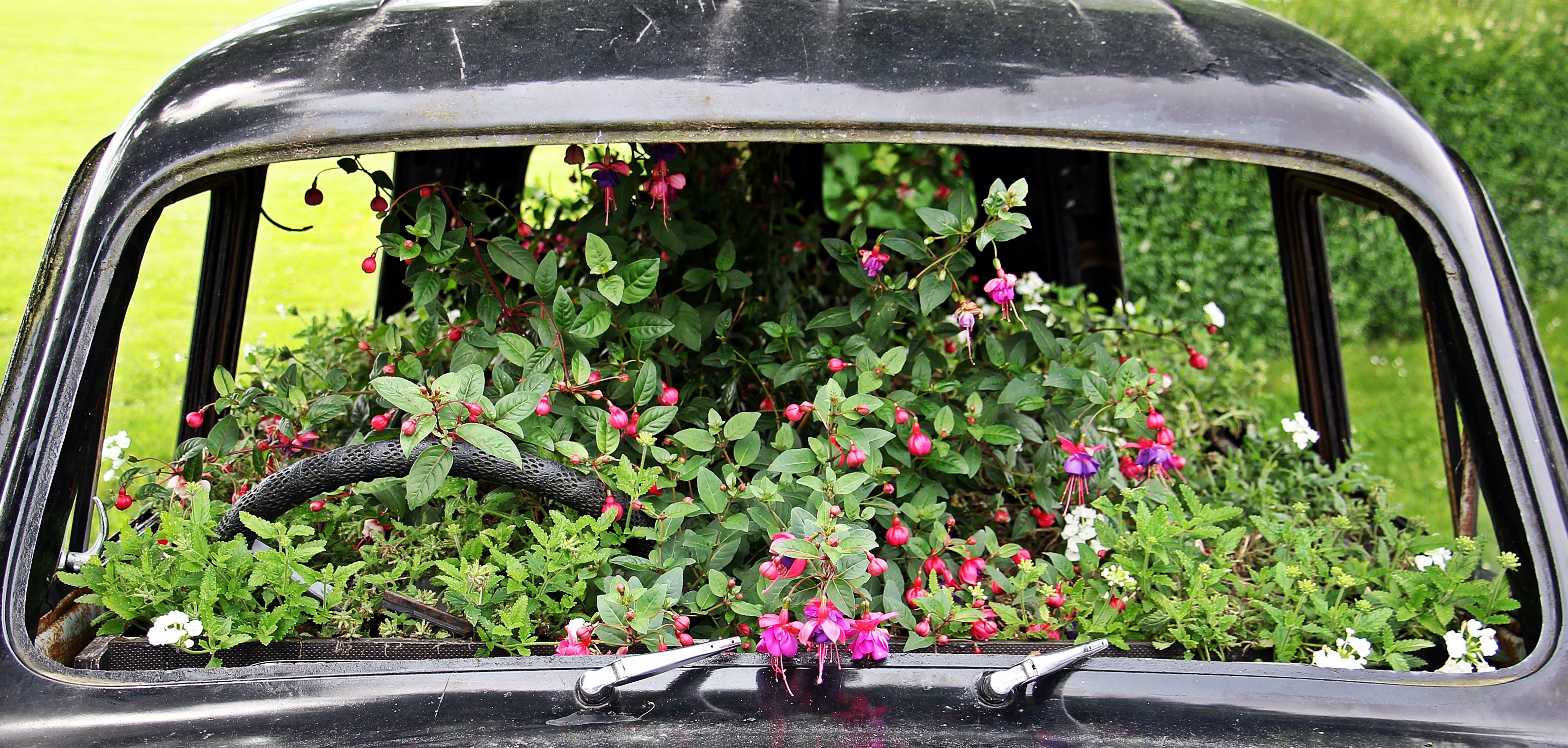 Free stock photo of flowers, auto, deco, planted