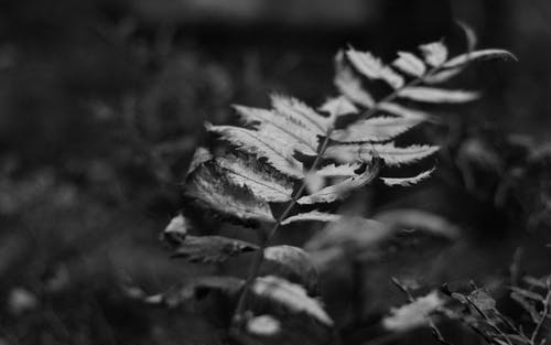 Monochrome Photography of a Plant