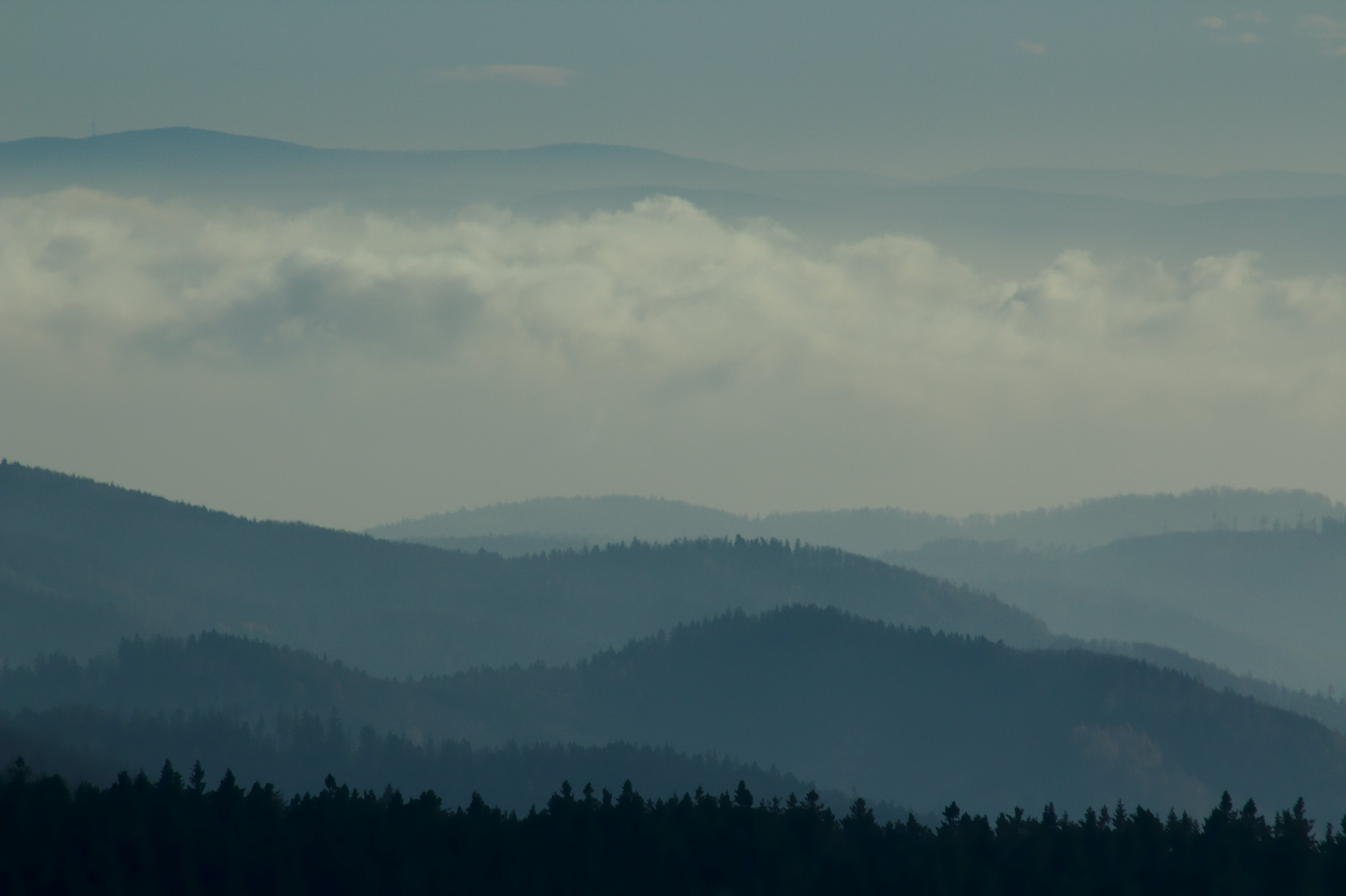 Foto d'estoc gratuïta de bosc, ennuvolat, muntanyes, muntanyes blaves